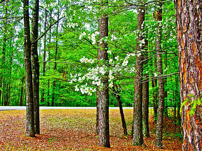 Dogwood At  Mile 198 On Natchez Trace Parkway-mississippi   Art Print by Ruth Hager