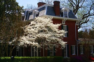 Photograph - Dogwood At Old Salem 1 by Kathryn Meyer