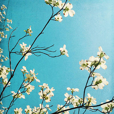 Photograph - Dogwood Blooms by Kim Fearheiley