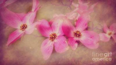 Photograph - Dogwood Blossom  Beauty by Peggy Franz