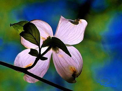 Photograph - Dogwood Blossom by Ludwig Keck