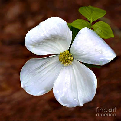 Painting - Dogwood Blossom Yosemite by Bob and Nadine Johnston