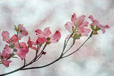 Dogwood Branch Art Print by Angie Vogel
