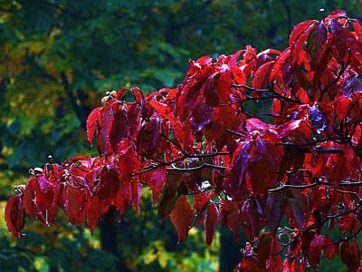 Dogwood Branch In Autumn Art Print by Bill Shuman