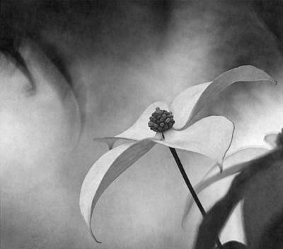 Photograph - Dogwood Breeze by Angie Vogel