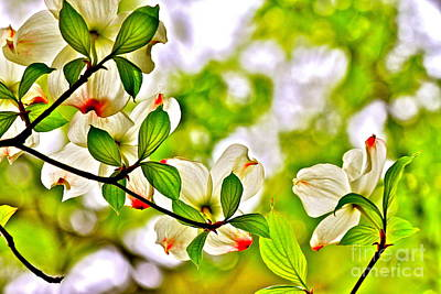 Dogwood Impressions I Art Print by Jay Nodianos