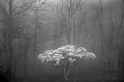 Photograph - Dogwood In The Fog  by Jim Dollar