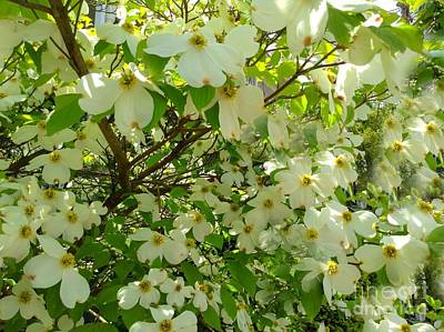 Art Print featuring the photograph Dogwood Kissed By The Sun by Becky Lupe