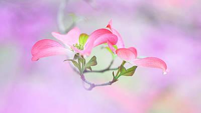 Macro Flower Photograph - Dogwood by Purple Bamboo