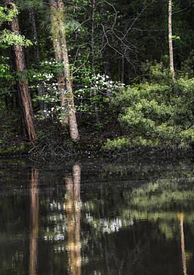 Photograph - Dogwood Reflections by Philip Rispin