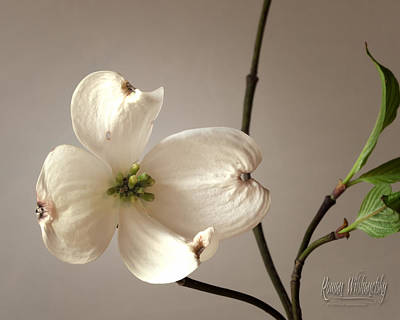 Photograph - Dogwood by Roman Wilshanetsky