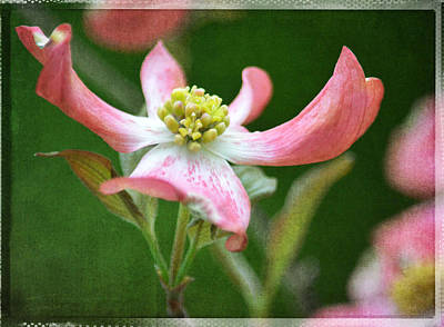 Dogwood Season Number Five Art Print