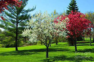 Photograph - Dogwood Tree by Christopher Shellhammer