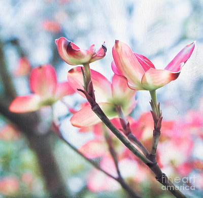 Photograph - Dogwood Tree by Colleen Kammerer