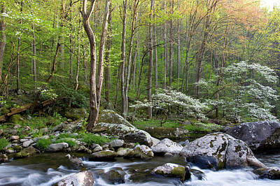 Tremont Photograph - Dogwood Trees In Spring Along Middle by Panoramic Images