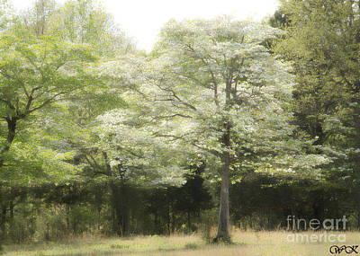 Photograph - Dogwood Trees by Wanda Krack