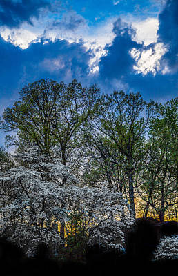 Photograph - Dogwoods And Dramatic Sky by Karen Saunders