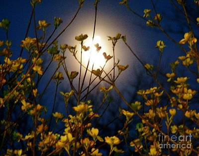 Photograph - Dogwoods And Moonlight by Judy Via-Wolff