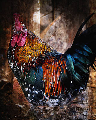 Photograph - Doing The Rooster Strut by Lee Craig