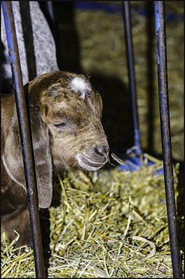 Photograph - Doing Time For The Crime At Wolcott Farm  by LeeAnn McLaneGoetz McLaneGoetzStudioLLCcom