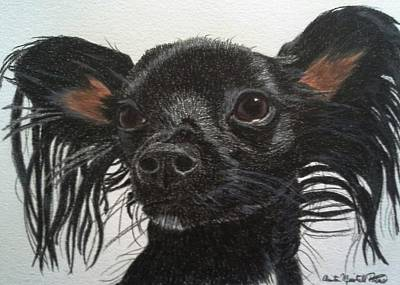 Drawing - Dolly - Chihuahua/dachshund Mix Commission by Anita Putman