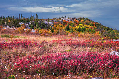 Photograph - Dolly Sods Autumn Colors by Mary Almond