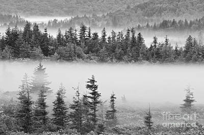 Dolly Sods Wilderness D300_10363_bw Art Print by Kevin Funk