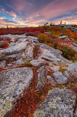 Monongahela National Forest Photograph - Dolly Sods Wilderness D30019841 by Kevin Funk
