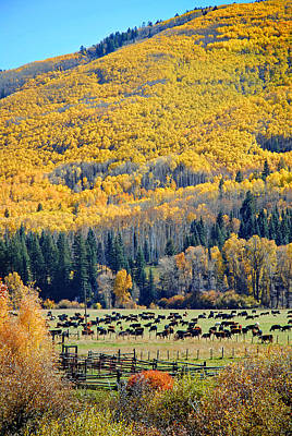 Photograph - Dolores River Ranch Fall 02 by Jeff Brunton