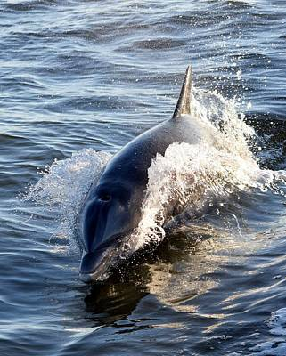 Photograph - Dolphin 1 by Sheri McLeroy