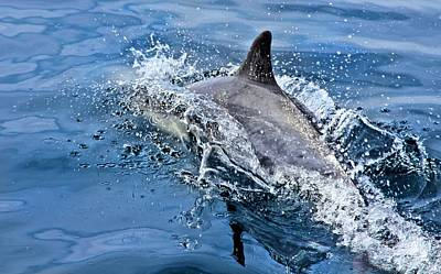 Photograph - Dolphin Breaching by Jane Girardot