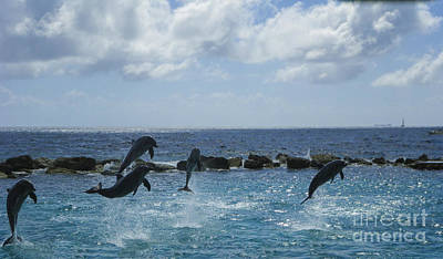 Photograph - Dolphin Fun by Louise Magno