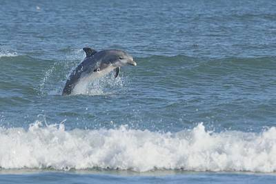 Photograph - Dolphin In Surf II by Bradford Martin