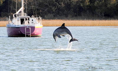 Dolphin Jumping In Taylors Creek Art Print