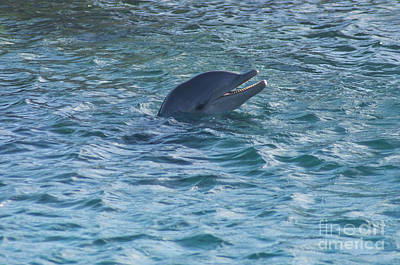 Photograph - Dolphin by Louise Magno