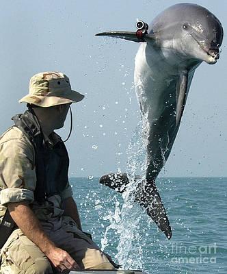 Dolphin Art Print by Paul Fearn