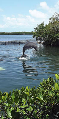 Photograph - Dolphin Play by Jeanne Donnelly