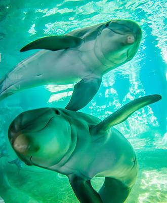 Photograph - Dolphin Posing For A Camera Closeup by Alex Grichenko