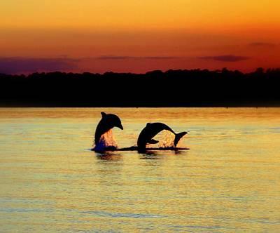 Dolphin Serenade Art Print by Karen Wiles