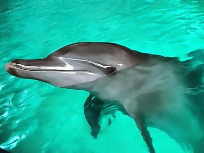 Dolphin Original by Sergey Lukashin