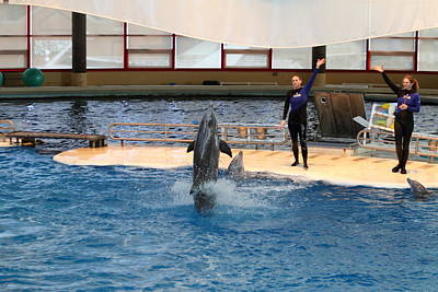 Dolphin Show - National Aquarium In Baltimore Md - 1212100 Art Print by DC Photographer