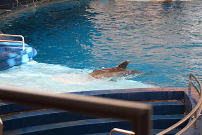 Dolphin Show - National Aquarium In Baltimore Md - 1212103 Art Print by DC Photographer