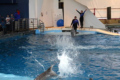 Baltimore Photograph - Dolphin Show - National Aquarium In Baltimore Md - 1212105 by DC Photographer