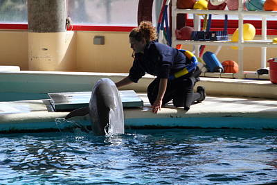 Nationals Photograph - Dolphin Show - National Aquarium In Baltimore Md - 1212108 by DC Photographer