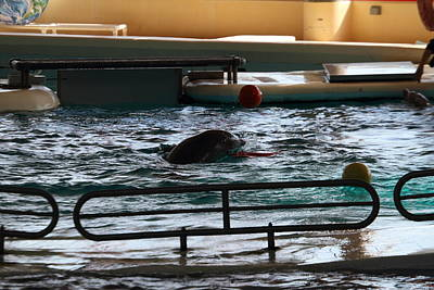 Inner Photograph - Dolphin Show - National Aquarium In Baltimore Md - 1212112 by DC Photographer