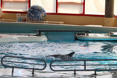 Dolphin Show - National Aquarium In Baltimore Md - 1212114 Art Print