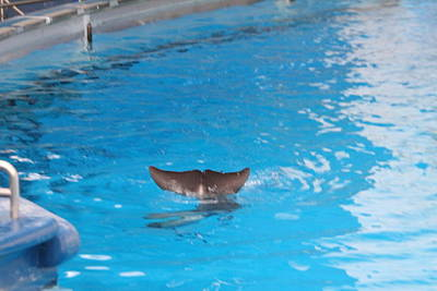 Dolphin Show - National Aquarium In Baltimore Md - 1212124 Art Print by DC Photographer