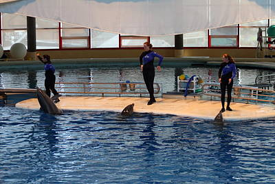 Dolphin Show - National Aquarium In Baltimore Md - 1212128 Art Print by DC Photographer