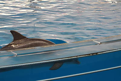 Baltimore Photograph - Dolphin Show - National Aquarium In Baltimore Md - 121213 by DC Photographer
