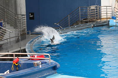 Baltimore Photograph - Dolphin Show - National Aquarium In Baltimore Md - 1212131 by DC Photographer